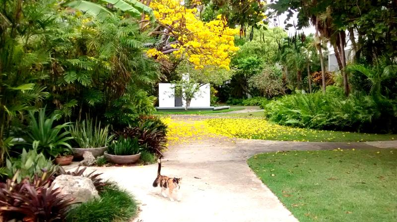Amazing nature´s colors. Common grounds. - Ample Garden Apt. Studio Near Train - San Juan - rentals
