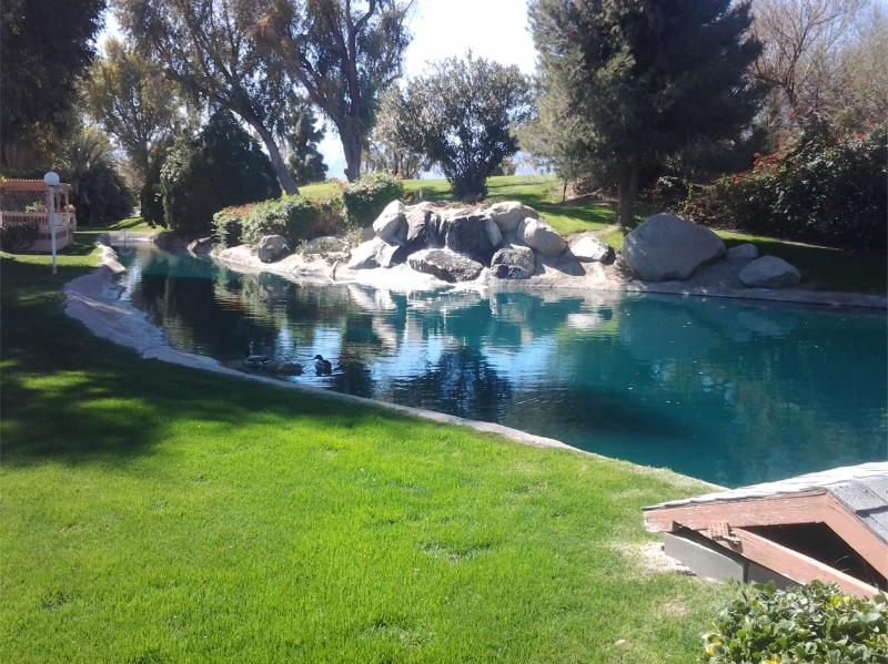 Right in your Backyard - Tranquility by the Waterfall - Indio - rentals