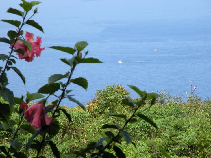 Your Heavenly OceanView from the cottage lanai - Romantic S Kona Cottage wth  Incredible Oceanview - Captain Cook - rentals