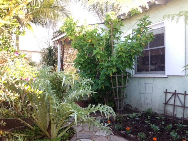 Front of House - Tropical Garden Beach Retreat, Blocks from Sand! - San Diego - rentals
