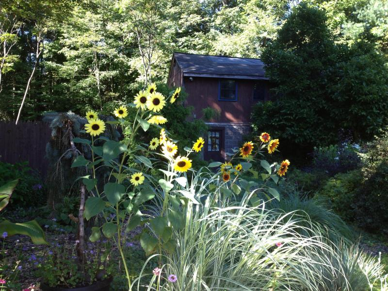 Through the sunflowers the Cottage awaits company - Paint the Night Cottage in the Wood - Chichester - rentals