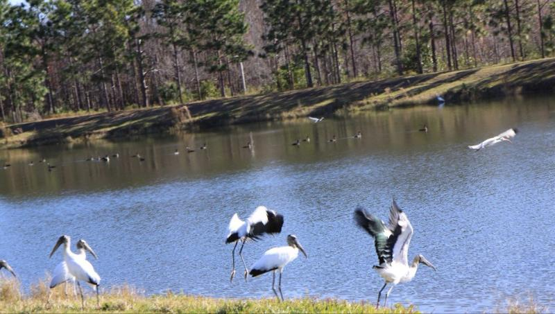 Outside of the lake, large and small birds can often be seen - sweet home hotel - Orlando - rentals