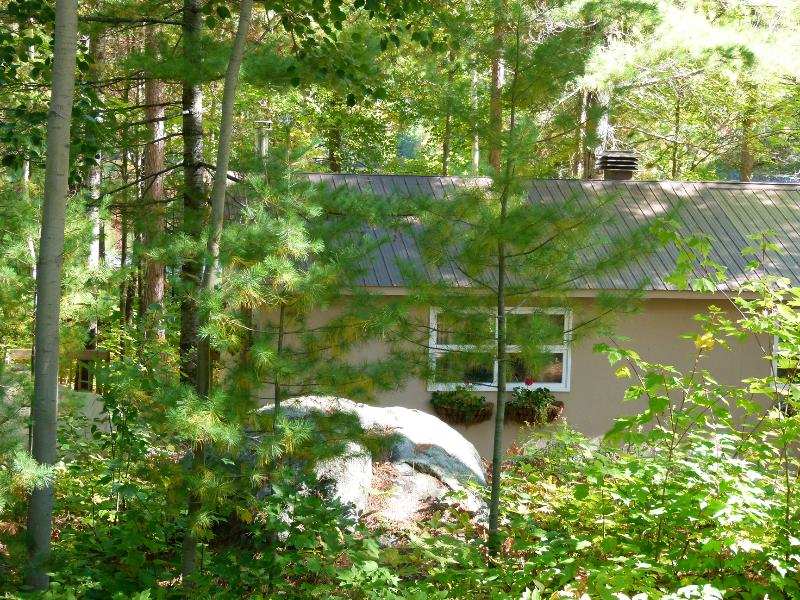 Summer view  - Cozy Cabin in the Woods - Barry's Bay - rentals