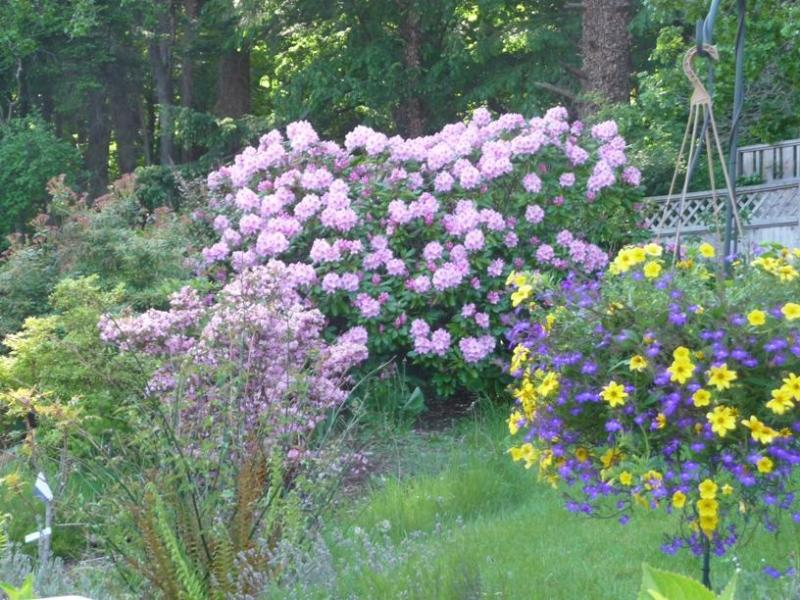 Colorful garden  - LOCATION_Affordable Luxury_Privacy _Oasis_Families - Victoria - rentals