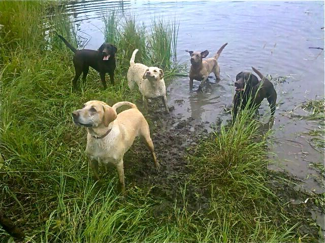 Wet Dog Ranch - Wet Dog Ranch - Fairbanks - rentals