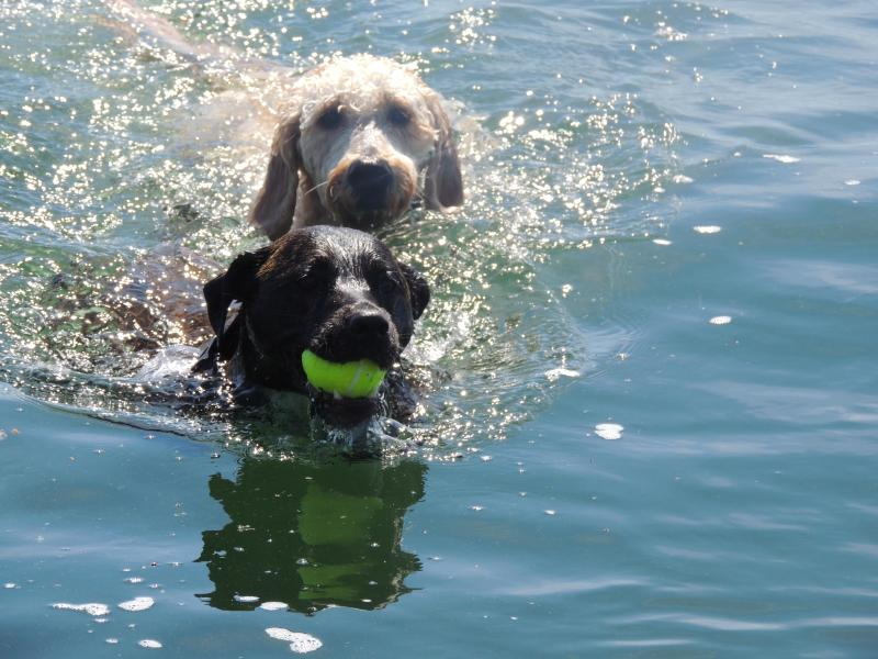 Doggies swimming off private dock - Haven on the Lake (Waterfront Vacation Home) - Sleeps 7 - Lucerne - rentals