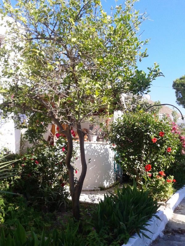 Rear Garden - Duplex Villa with seaviews in Bodrum Turgutreis - Turgutreis - rentals