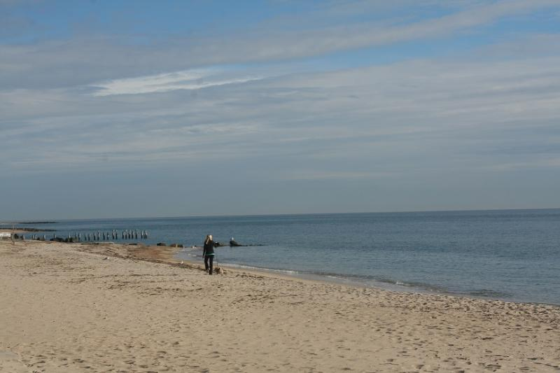 Falmouth Beach directly across from property - Falmouth Heights Beachfront  Gem 119095 - Falmouth - rentals