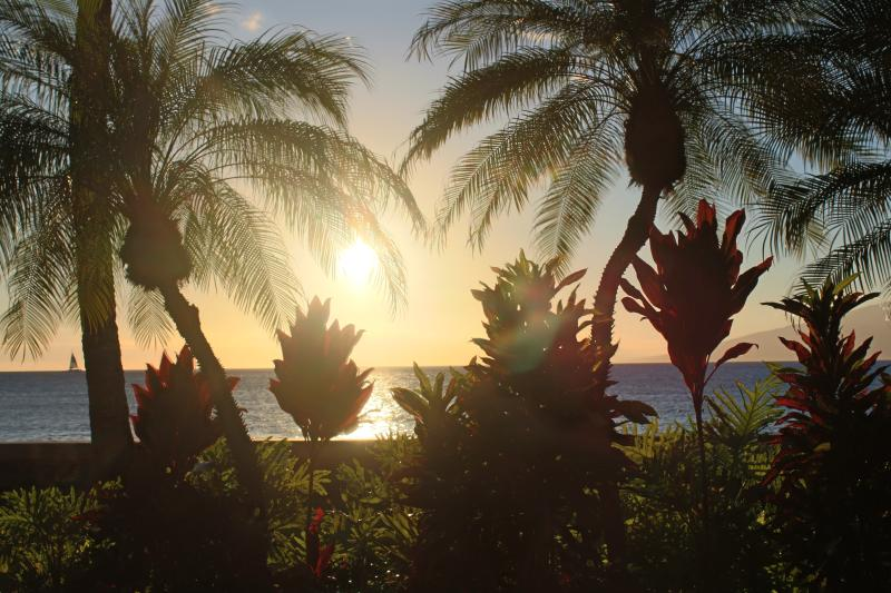 Sunset for across road at Seawall - Pohailani Condo -This New Oasis waits you! - Lahaina - rentals