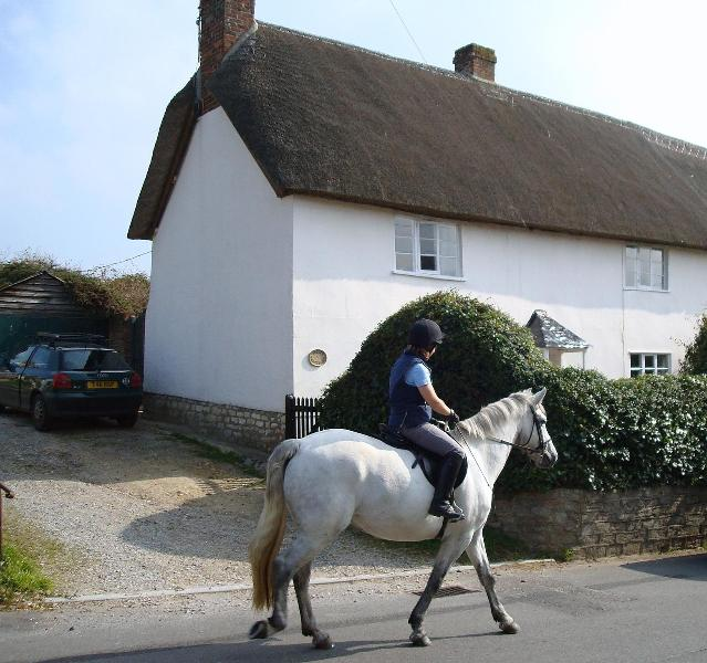 Rush hour at Prides Cottage - Prides Cottage, Dorset - Child Okeford - rentals