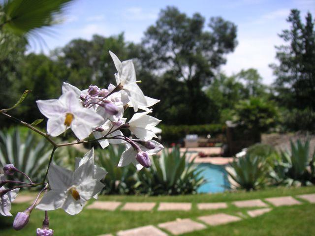 Vineyard Garden Estate - Image 1 - Vineburg - rentals