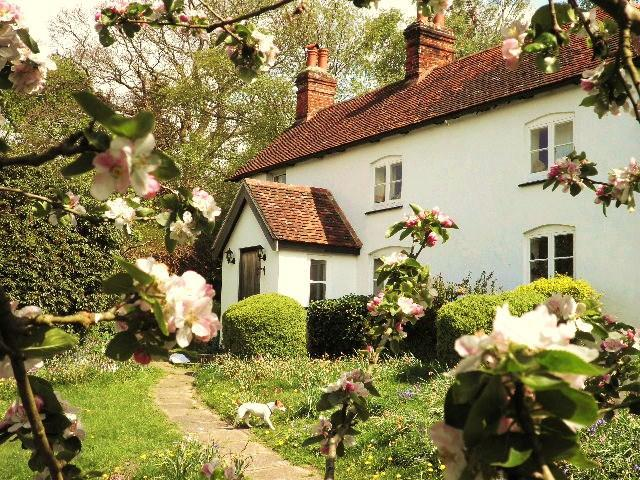 Spring Cottage - 15thC cottage in the heart of the Southdowns Park - Trotton - rentals