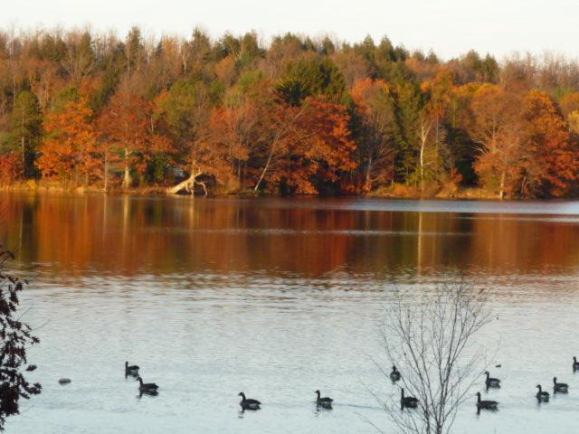 From CONDO PATIO with Canada geese stopping over last October - LAKESIDE SPACIOUS 1 BEDROOM  PRIVATE  CONDO / APT. - Jefferson - rentals