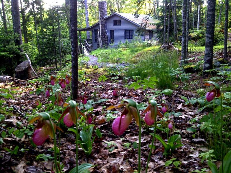 Lady slippers along the path to Grindstone in May. - Grindstone Cottage - Brooksville - rentals