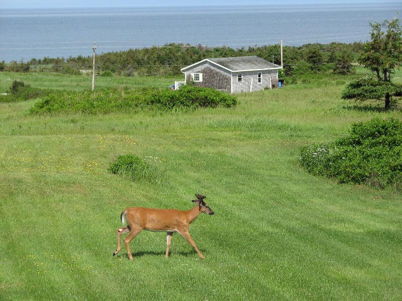 ocean side on a 100 acre coastal property,beaches and hillsides  - Cabot Trail  Panoramic blend of ocean & highlands - Margaree Harbour - rentals