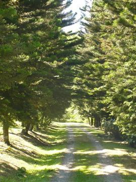 Pine tree lined driveway leading to the house - Great Family Retreat with Pool & Hot Tub - Turrialba - rentals