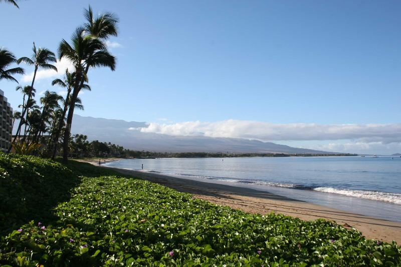 Best Maui View! Direct Oceanfront!  - Sugar Beach Maui - $100/Night! Direct Oceanfront! - Kihei - rentals