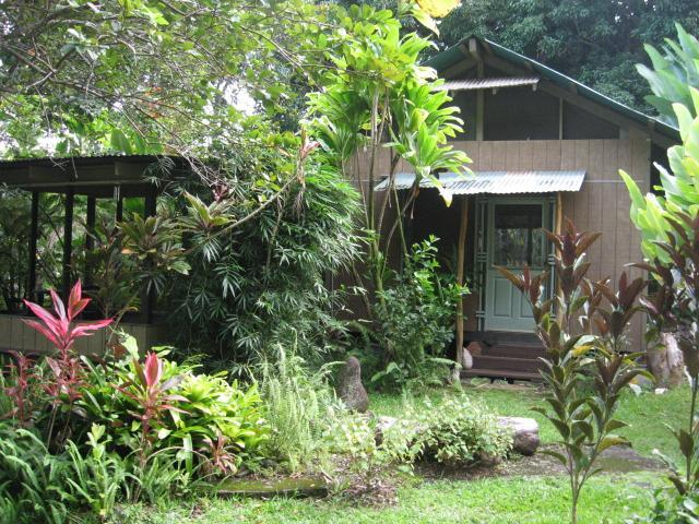 Mango Tree Cottage, our solar cottage, surrounded by bamboo, guava, avocado and multi-colored plants - Mango Tree Cottage, hidden hideaway - Hakalau - rentals