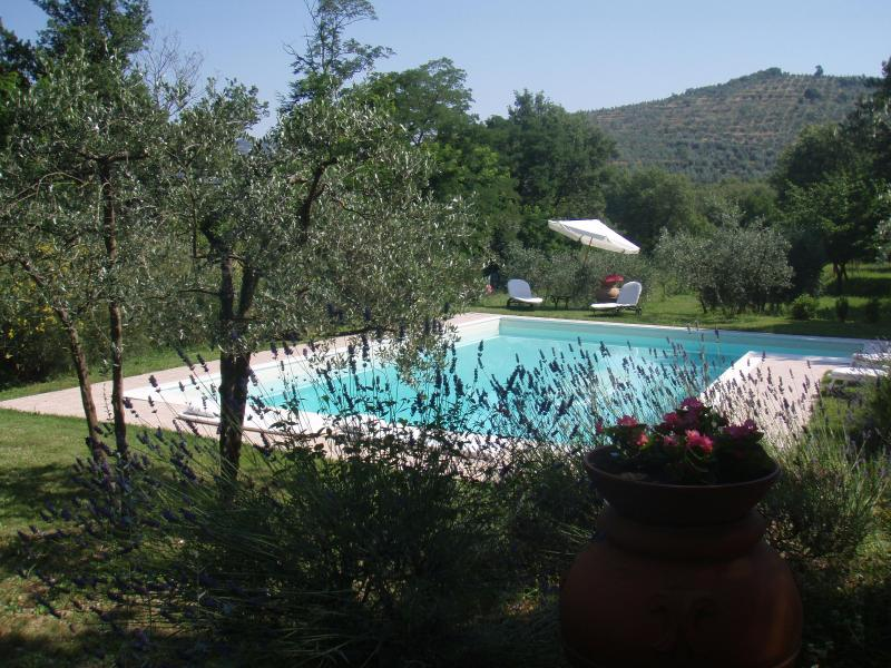 THE POOL TO IL FIORE DI CHIO - VILLA Il Fiore di Chio with Swimming Pool and Garden, near Cortona - Cortona - rentals