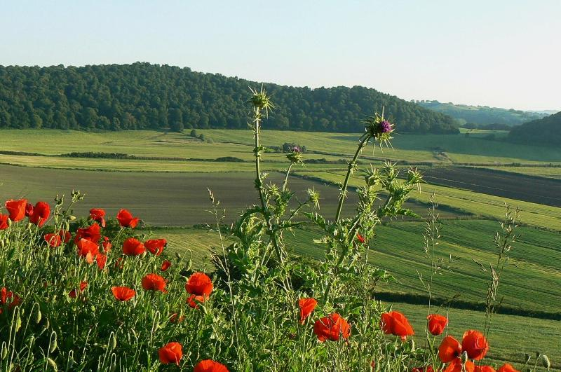 Sellanraa in Italy The view is fabulous! - Sellanraa in Italy Nr lake Bracciano north of Rome - Campagnano di Roma - rentals