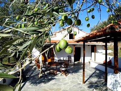 Drosia Cottage - A Cute House Among the Olive Trees. - DROSIA COTTAGE - Cute private house in olive grove - Skopelos - rentals