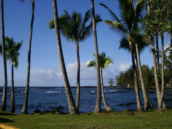 Just a Short Walk Away - Best Location for Swimming and Snorkeling in Hilo - Hilo - rentals