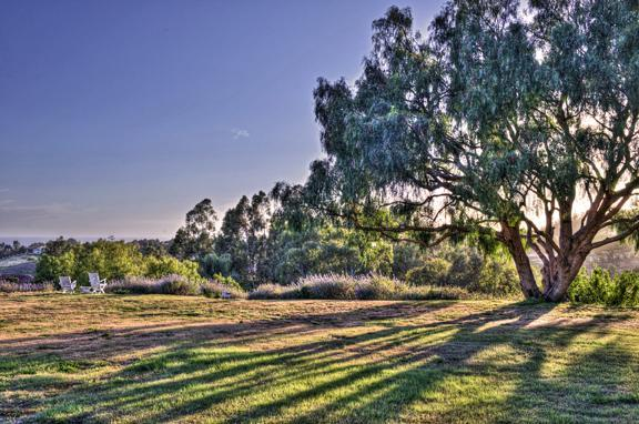 View from Backyard - Vineyard Cottage with Ocean View - Malibu - rentals