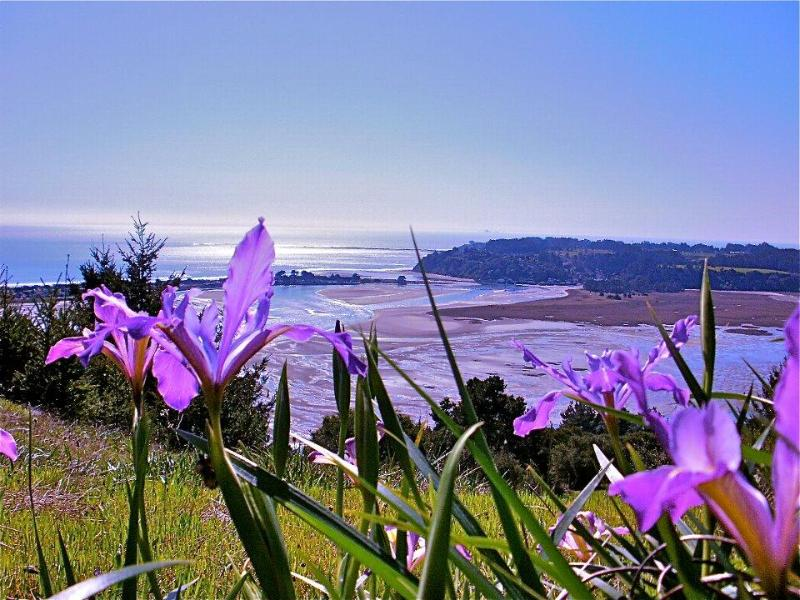 MONARCH HAVEN Romantic Retreat Home by Agate Beach - Image 1 - Bolinas - rentals