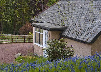 Bluebell Cottage is a beautiful 2 bedroomed holiday Cottage - Bluebell Cottage at Westcliffe House - Rothbury - rentals