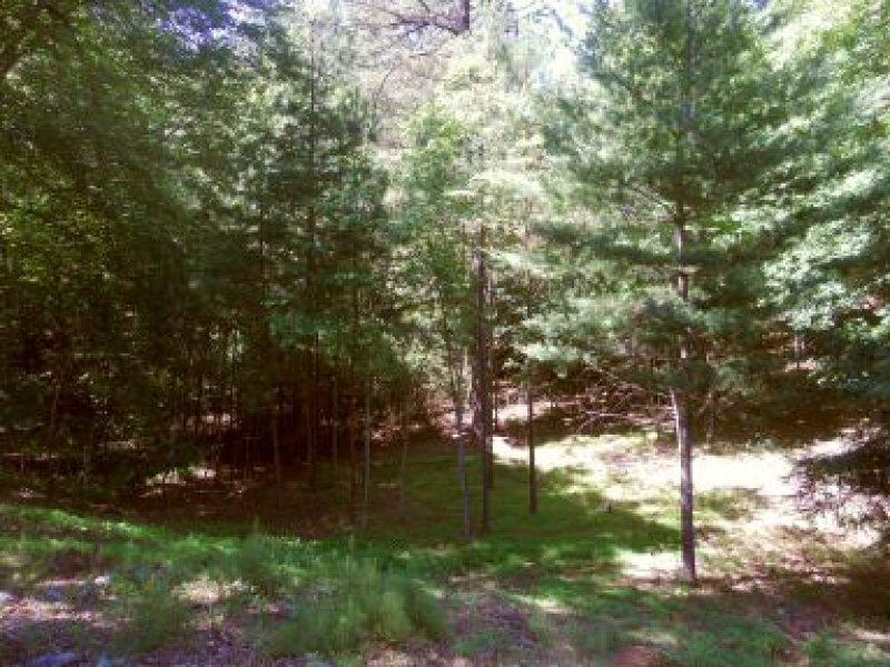 Welcome to Bear Bluff - Image 1 - Ellijay - rentals