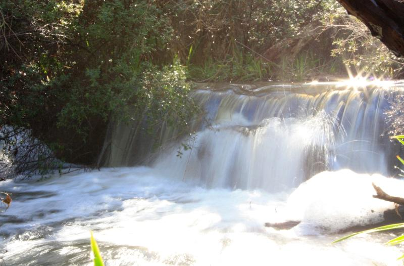 Bickley Brook flows through the property - Bickley Brook Cottage - Airconditioned & Free WiFi - Wattle Grove - rentals