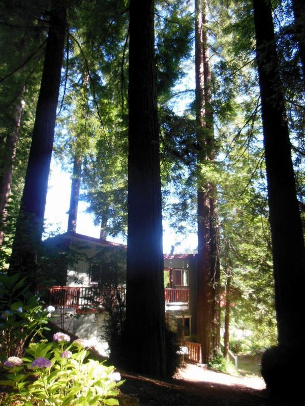 Cabin Exterior - Redwood Butterfly Cabin Riverfront Canoe Included - Monte Rio - rentals
