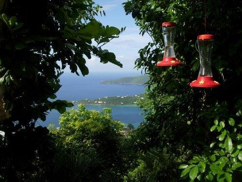 View From Deck - Two moons Over Magens Bay-Serene, Romantic and Se - Saint Thomas - rentals
