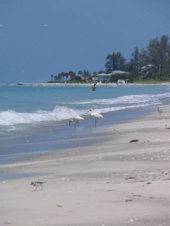 April Special! Villa steps from the beach! - Image 1 - Longboat Key - rentals