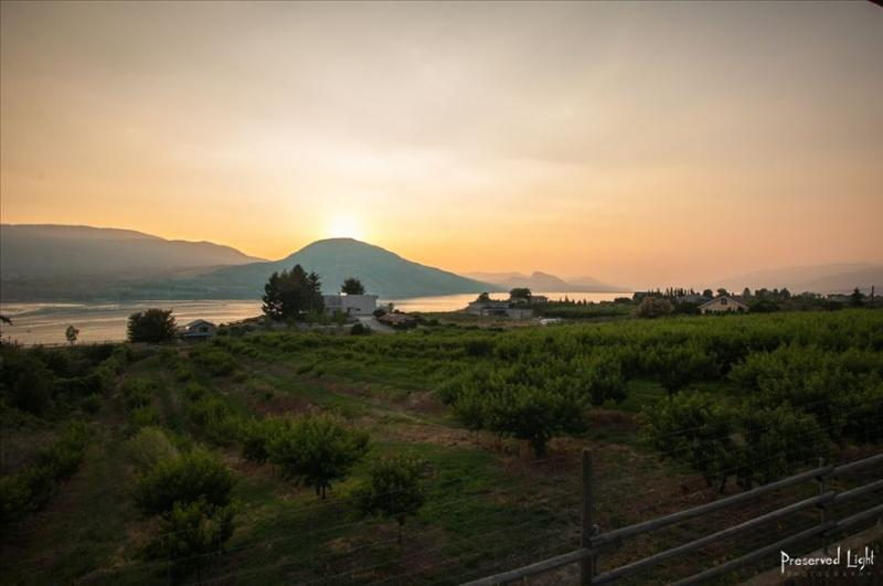 Arriving at our 4 1/2 acre property you see our peach orchard, villa Orion & local concierge's home - Villa Orion: home to stay forever;2+1 Bdrs,slps 6 - Penticton - rentals