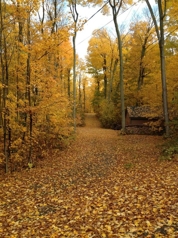 Beauatiful Fall Foilage - Secluded-Luxe Lakefront- 90 min from Chicago - Union Pier - rentals