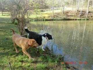 Pets Invited!  (limit 2) - Preston's Thicket Cabins-Pet Friendly, Wheelchair accessible