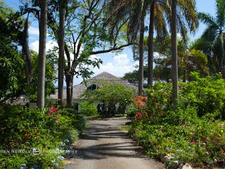 Lime Tree - Jamaica vacation rentals
