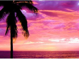 Tree Tipped Sunset - DOLPHIN VIEW  MAZATLAN! BEACH FRONT Winter Rental - Mazatlan - rentals