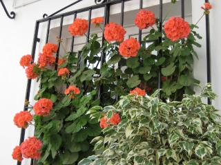 Flowerhouse CASA CHARLOTTE 1st unit (ground floor) - Nerja vacation rentals