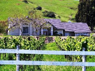 Vineyard Estate in Sonoma Wine Country - California Wine Country vacation rentals