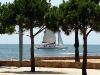 Do you want to know how affordable it is to take a trip on the catamaran? - SIERRA BEACH SERVICES SL