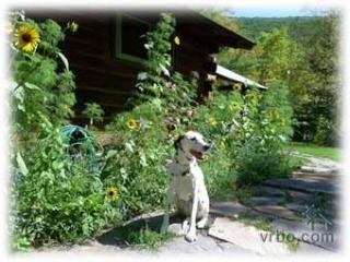 Charming Real Log Cabin, Mtn Views, 2 Hrs from NYC - Phoenicia vacation rentals