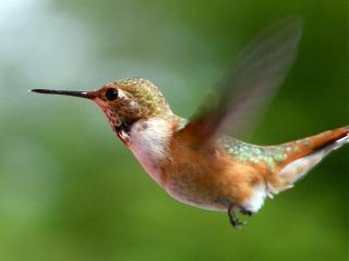 A feeder outside your window lets you watch the humming birds - Maria Dammel