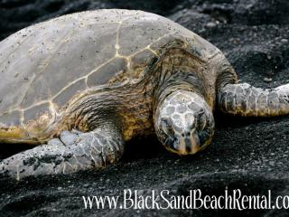 Black Sand Beach Rental - Pahala vacation rentals