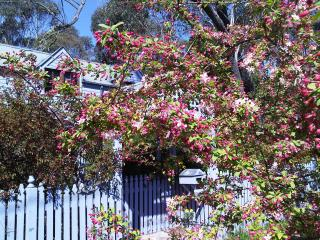 Lavender Manor - Blackheath vacation rentals