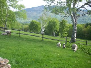 High Shelter Farm: Ascutney Mountain View Charmer - Perkinsville vacation rentals