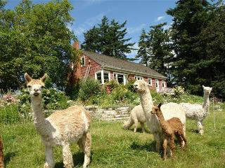 Farmhouse-alpacas-fantastic views- miles of beach - Whidbey Island vacation rentals