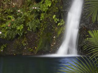 Aloha Falls ~ Truly Unique - Hilo vacation rentals