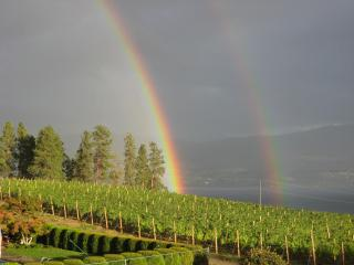 Beautiful Vineyard and Lake View, Private setting - West Kelowna vacation rentals